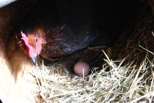 Egger2