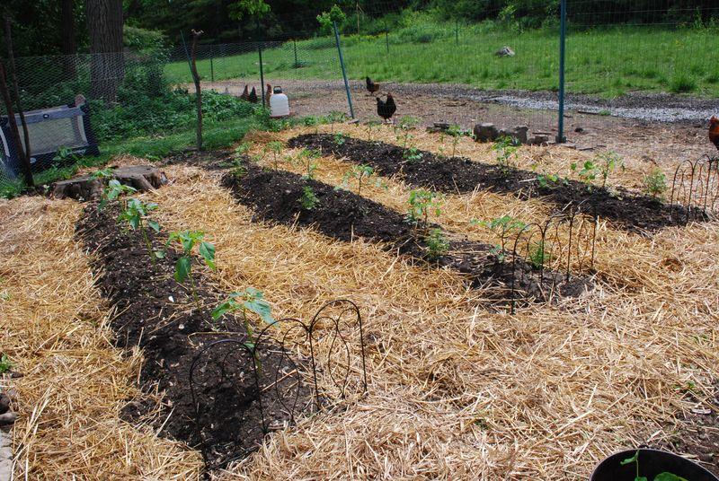 Tomato garden 6.4