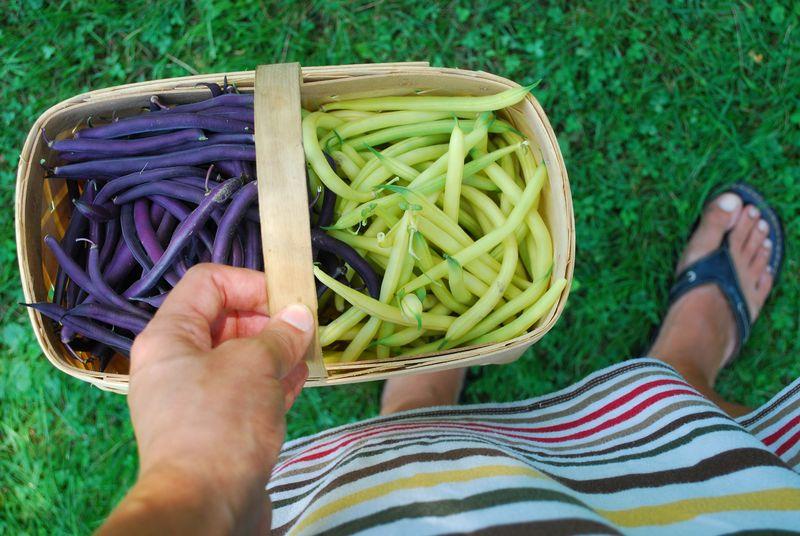 Bush beans 2