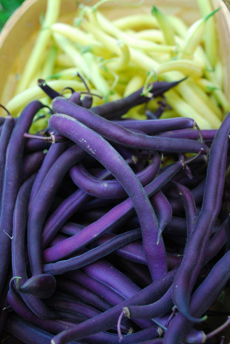 Bush beans 3